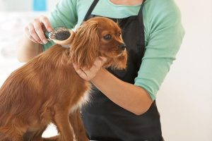 Top benefits of keeping your dog properly groomed